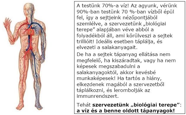Testünk biológiai terepe