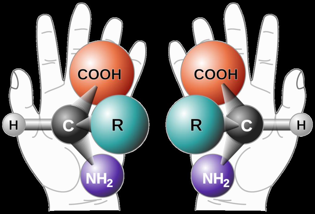L D aminosav