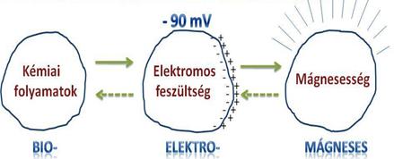 bio-elektro-mágneses