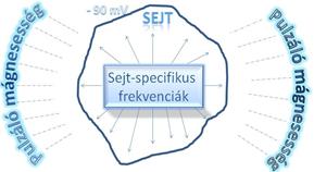 sejtspecifikusság