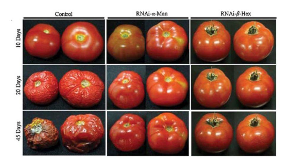 ht_tomato_progression